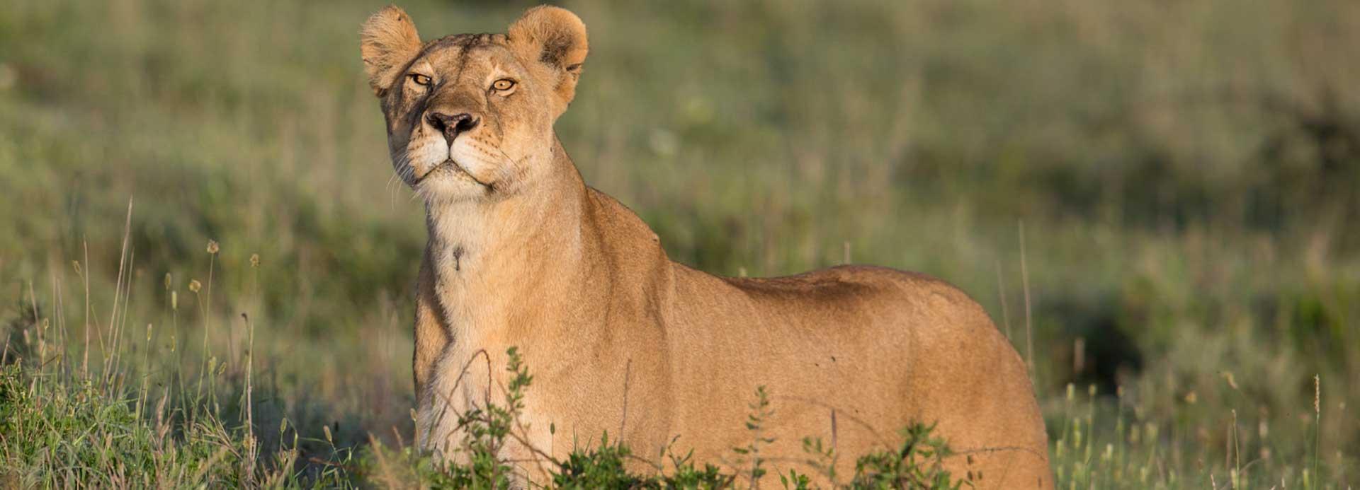 Look Tanzania Safari