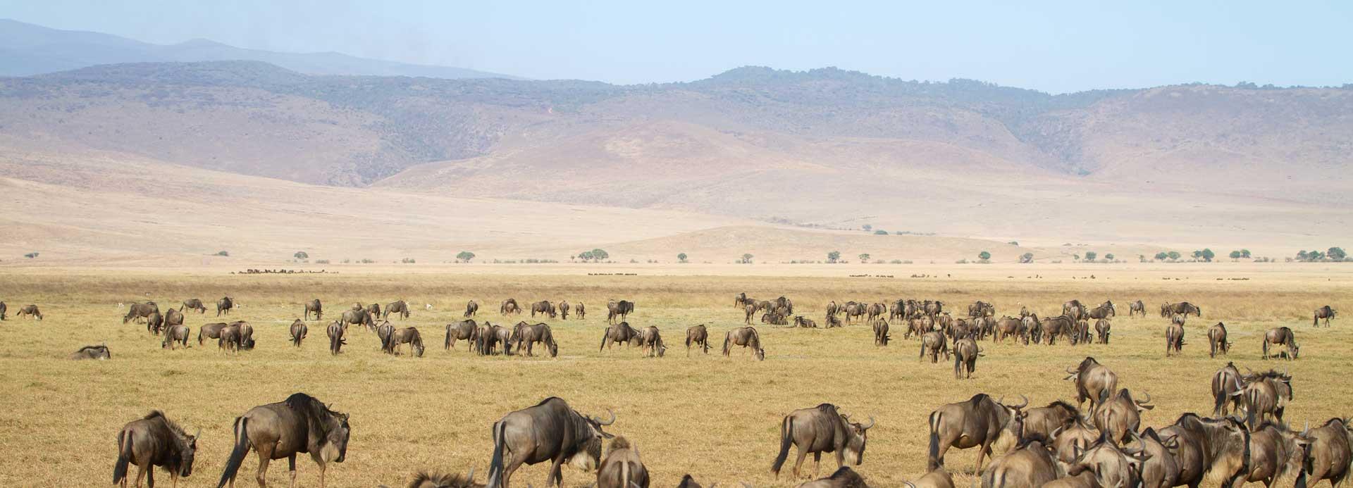 2 Day Safari To Ngorongoro Crater Look Tanzania Safari